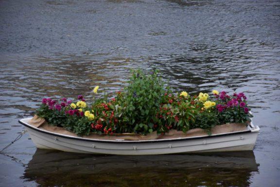 pivo-in-cvetje-hortikultura_2