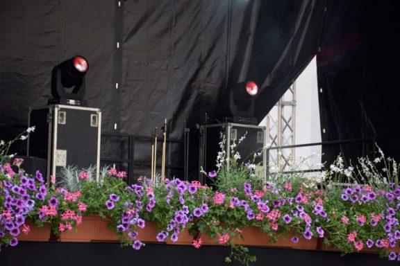 pivo-in-cvetje-hortikultura_5