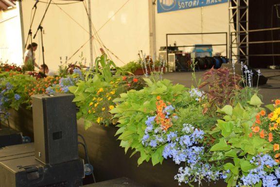 pivo-in-cvetje-hortikultura_6